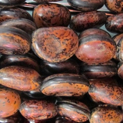 Anipay Seeds