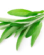 Fresh-Sage-Leaves-1024x676.jpg