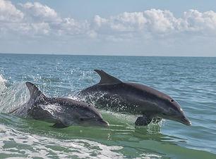 Dolphin Excursion.jpg