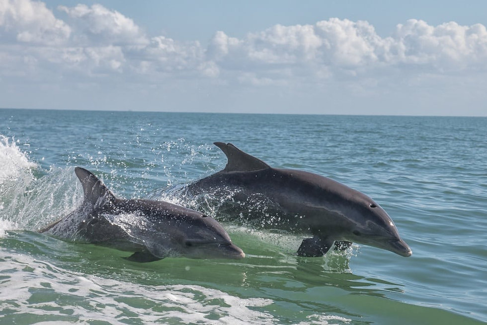Dolphin Cruise and Dolphin Tour
