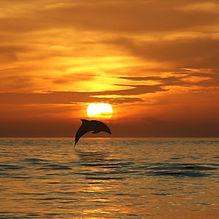 Sunset Dolphin.jpg