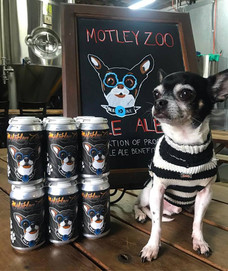 meatball is the face of motley zoo pale ale!