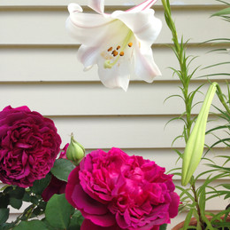 Roses and Lilies