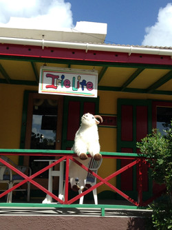 Billy Visits Irie Life
