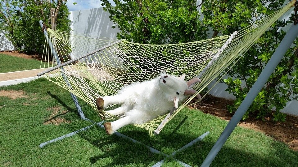 Billy on Hammock