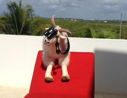 Billy Sees St. Barths & St. Maarten!