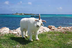 Billy Visits Scilly Cay
