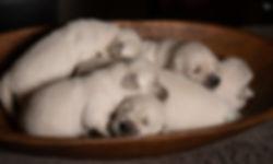 Puppies2w (9 of 9).jpg