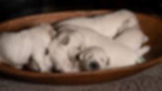 Puppies2w (8 of 9).jpg