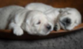 Puppies2w (3 of 9).jpg