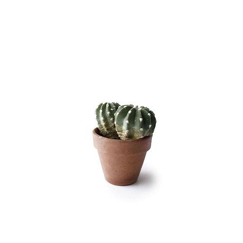 """Assorted Cactus in 4""""pot"""