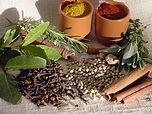 Plantas-medicinais1.JPG