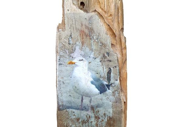 Calla Unikat auf Treibholz mit Möwe