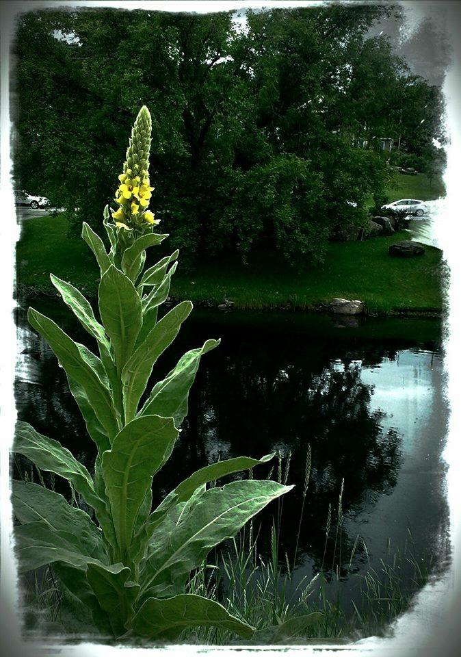 Bancroft River 2014 - Photo