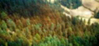 BrowerMonarch_edited.jpg