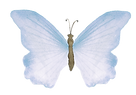butterfly 6_smalll.png