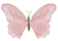 butterfly 3_small.png