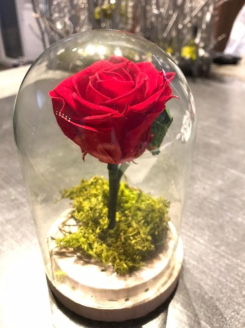 """Rose éternelle inspiration """"La Belle et La Bête"""""""