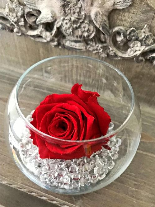 Rose éternelle dans sa bulle