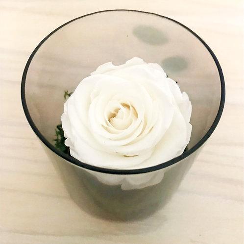 Rose éternelle dans son écrin de verre