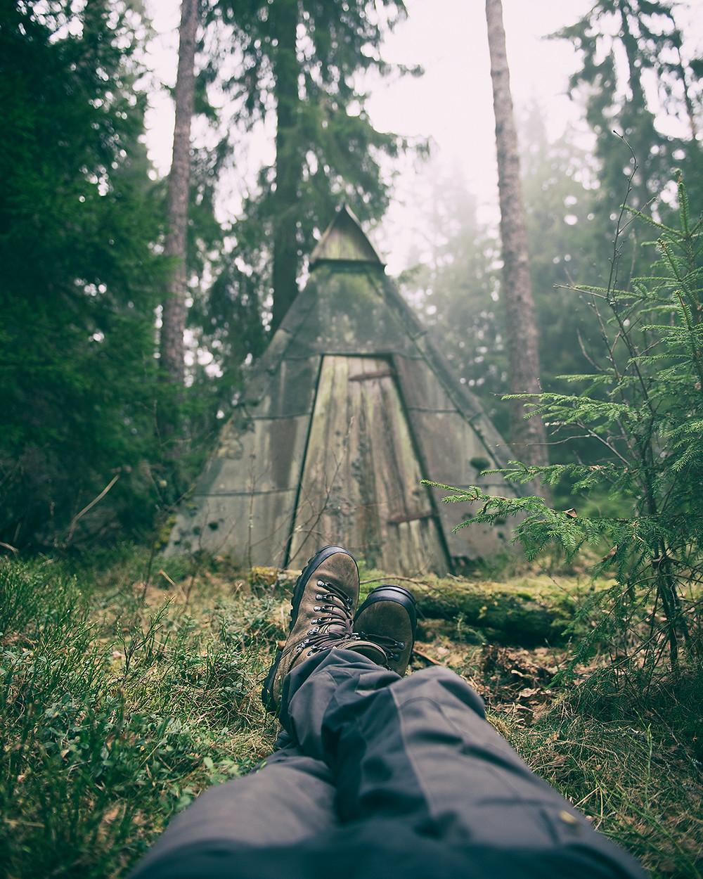 skog natur koja