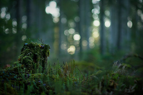 Lummerskogen