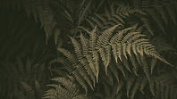 Fern%20pic_edited.jpg
