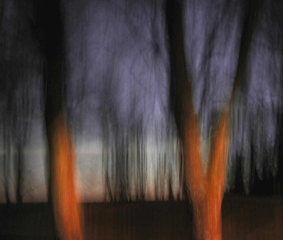 Truck Lights on Trees