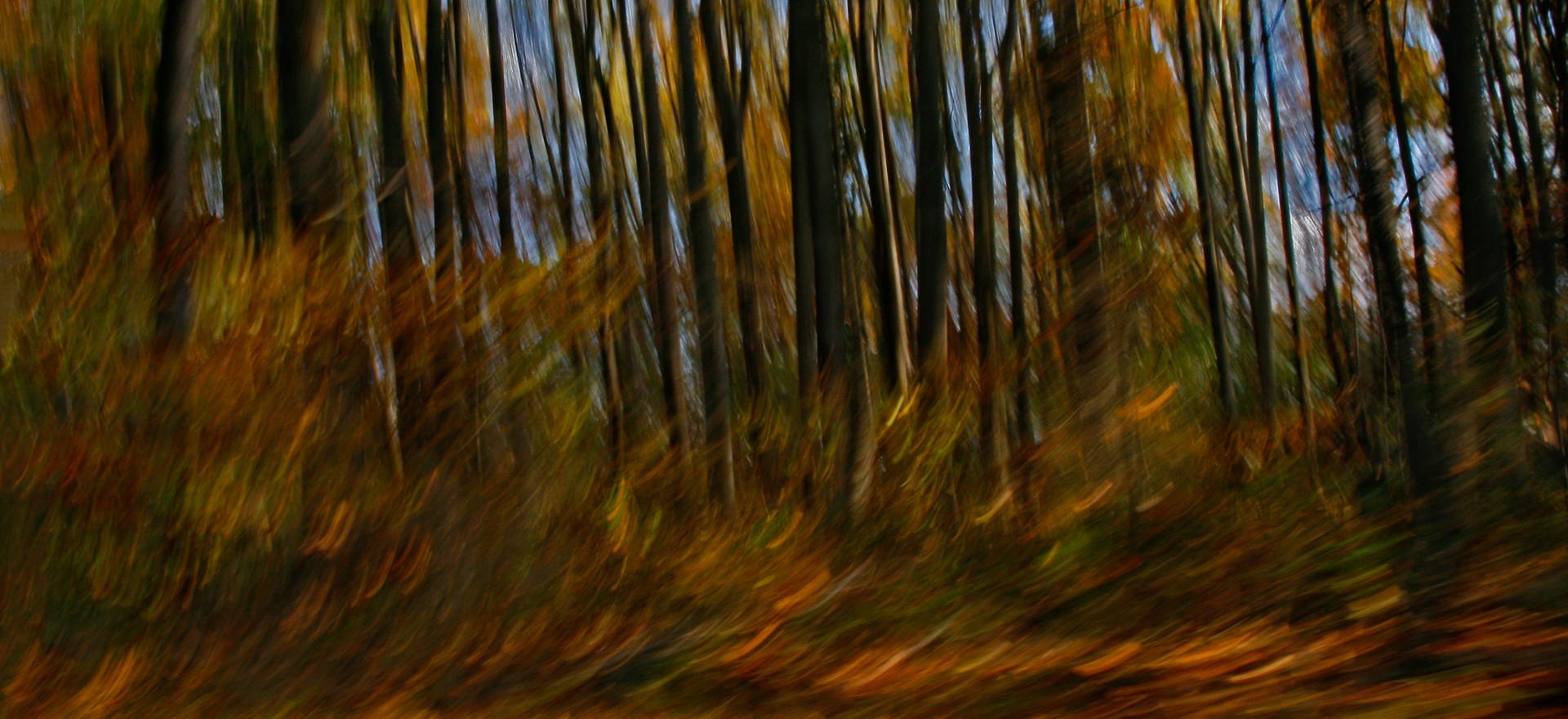 Autumn Car Ride