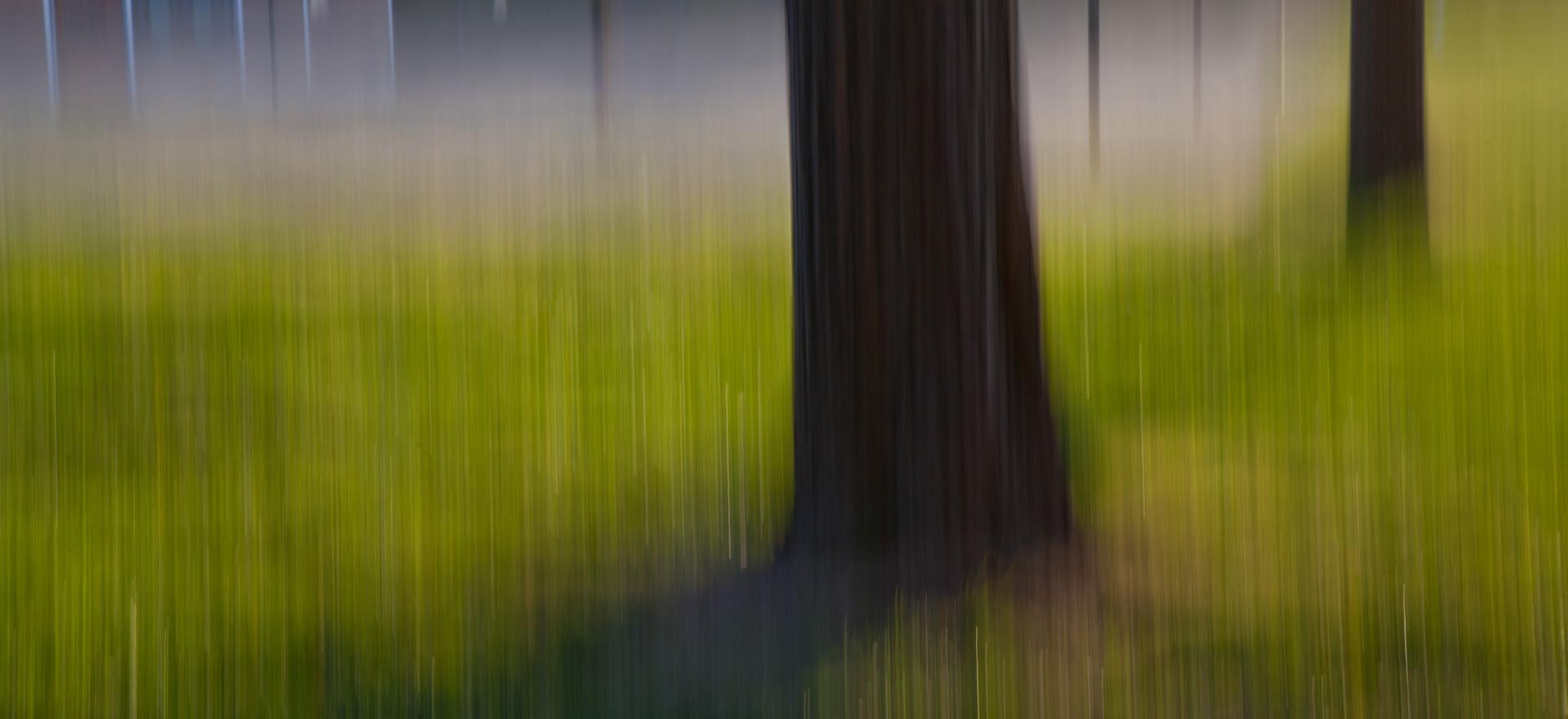 Playground Trees
