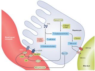 Hormônios da tireoide e Doença Hepática Gordura Não Alcoólica
