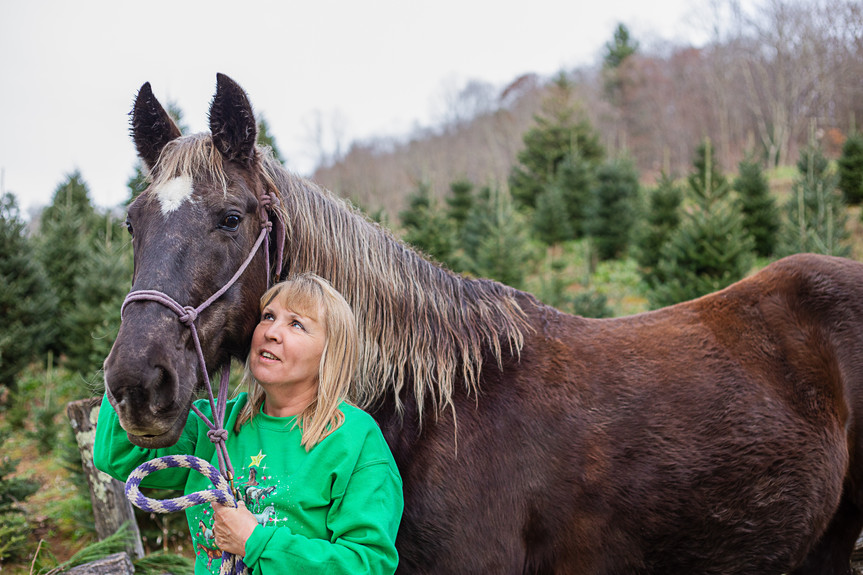 horse at Christmas tree farm