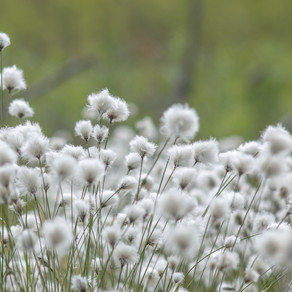 Cotton: A Sustainable Material for Textile Products