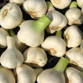 Garlic: More Than Just a Delicious Addition