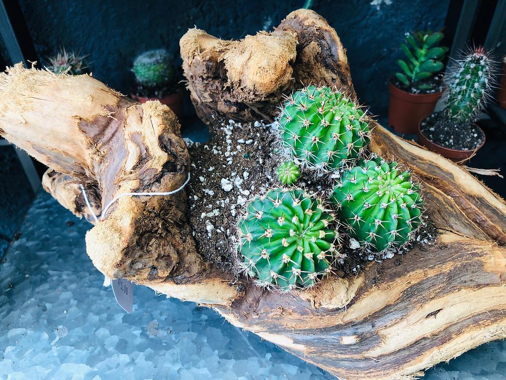 Succulent plants in wood design
