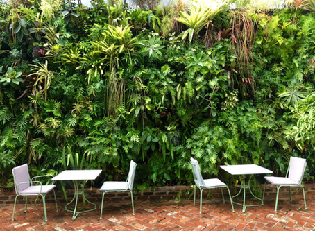 Biophilic Design: Connecting Nature & The Built Environment