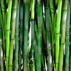 Bamboo: Sustainable Material for a Variety of Uses
