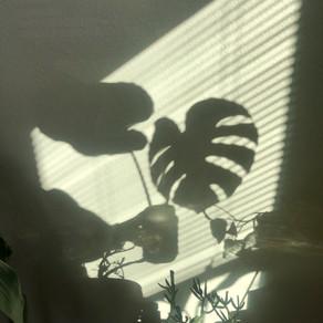 Feng Shui: Using Houseplants For Positive Energy