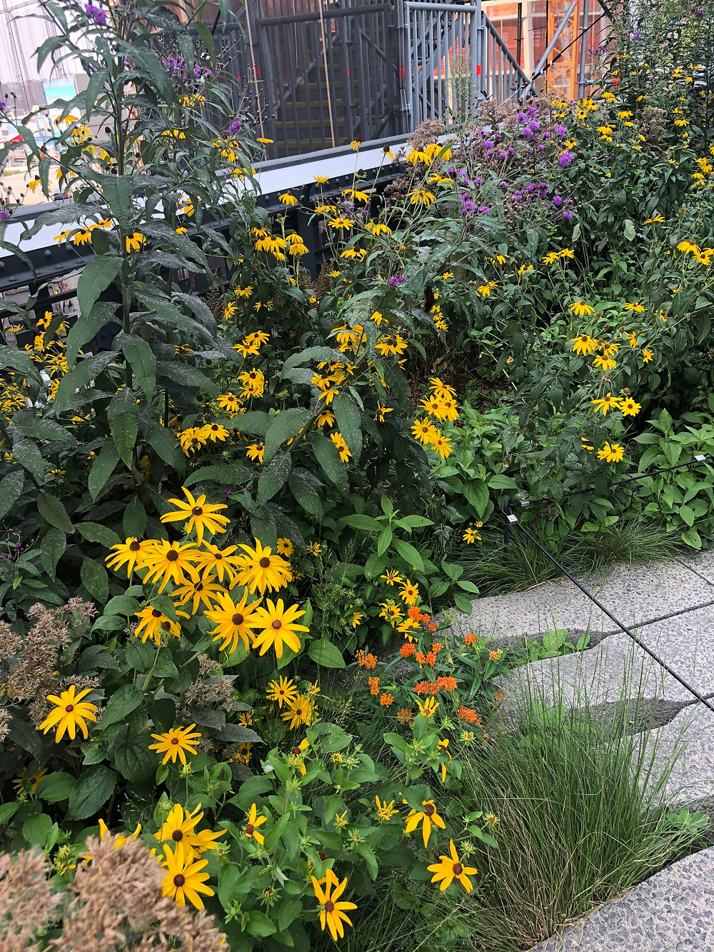 Native Plants on the High Line