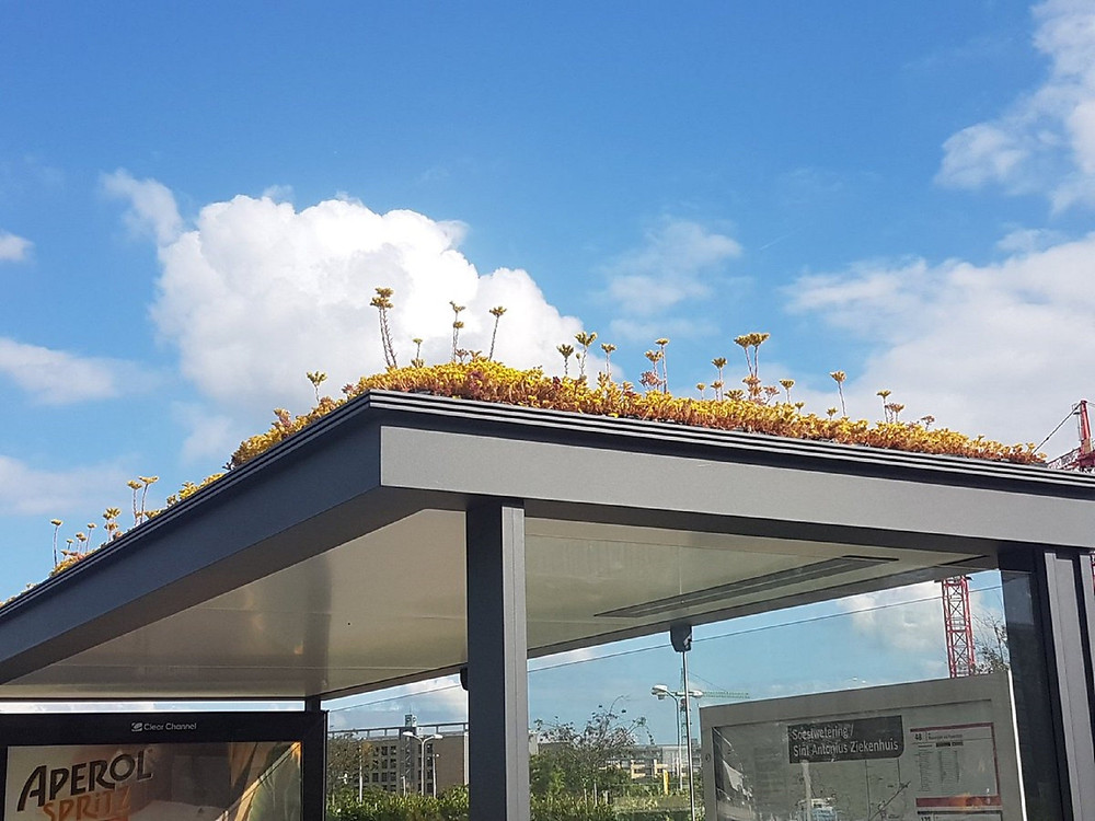 Dutch bus stops transform into bee sanctuaries