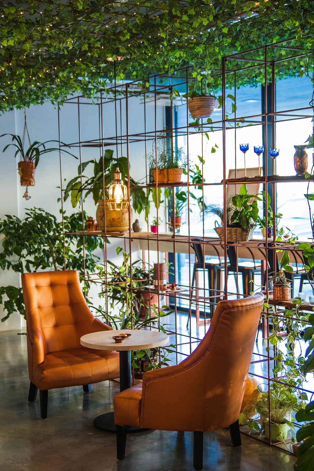 chairs surrounded by plants