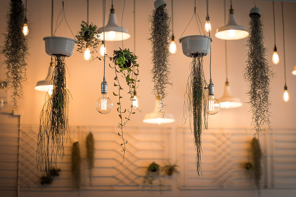 DIY plant holders