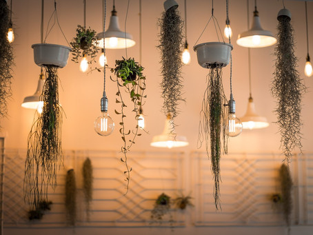 Unique Ways to Hang Plants