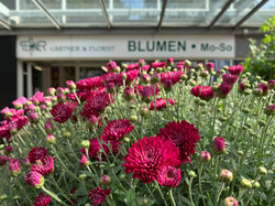 Fellner Blumen Filiale Floridsdorf