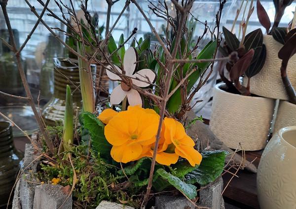 Fellner Blumen Impressionen 14
