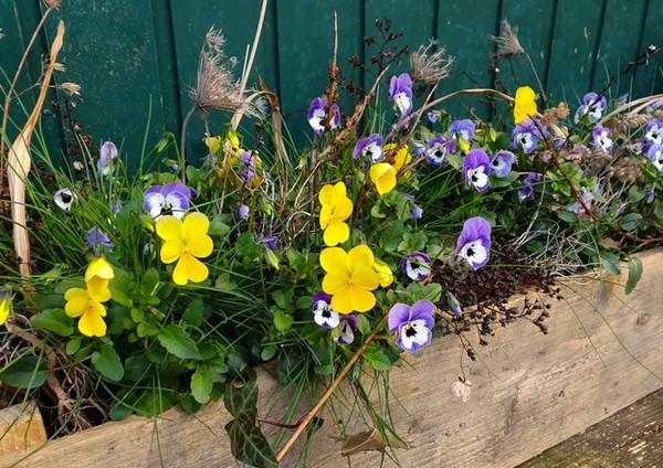 Fellner Blumen Impressionen 5