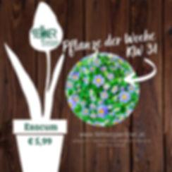 Pflanze der Woche KW31.jpg