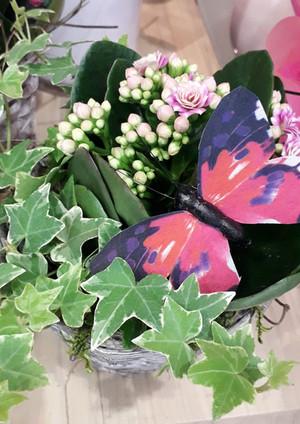 Fellner Blumen Impressionen 17