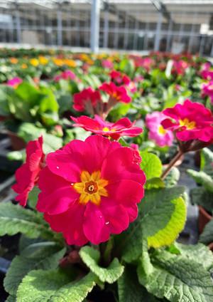 Fellner Blumen Impressionen 16