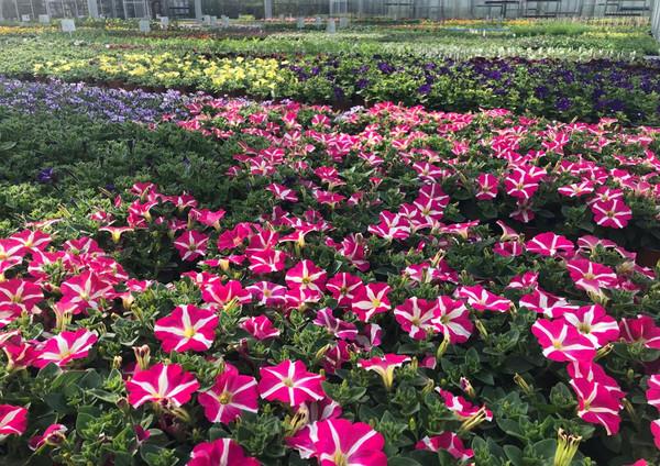 Fellner Blumen Impressionen 18